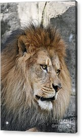 Acrylic Print featuring the photograph Onyo #4 by Judy Whitton