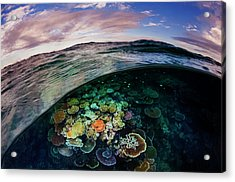 Opal Reef Off The Great Barrier Reef Acrylic Print