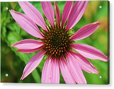 Acrylic Print featuring the photograph Open Bloom by Alicia Knust