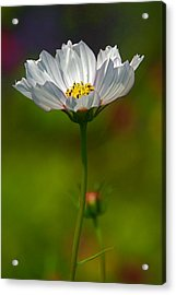 Acrylic Print featuring the photograph Open For All by Byron Varvarigos