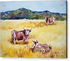 Open Range Patagonia Acrylic Print by Summer Celeste