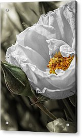 Open Your Heart Acrylic Print