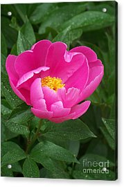 Acrylic Print featuring the photograph Peony  by Eunice Miller