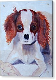 Opie As A Puppy Acrylic Print