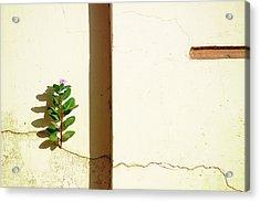 Optimism Pays Acrylic Print