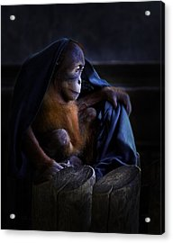 Orang Utan Youngster With Blanket Acrylic Print by Peter v Quenter
