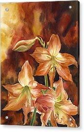 Orange Amaryllis Acrylic Print by Alfred Ng