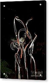 Orange And Black Rainforest Acrylic Print