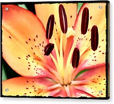 Orange And Pink Flower Acrylic Print