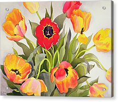 Orange And Red Tulips  Acrylic Print by Christopher Ryland