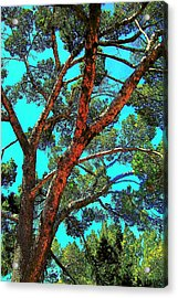 Acrylic Print featuring the photograph Orange And Turquoise  by Jodie Marie Anne Richardson Traugott          aka jm-ART