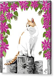 Orange And White Cat And Clematis Acrylic Print by Artellus Artworks