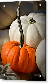 Orange And White Pumpkins Acrylic Print