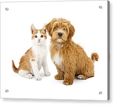 Orange And White Puppy And Kitten Acrylic Print