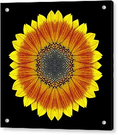Acrylic Print featuring the photograph Orange And Yellow Sunflower Flower Mandala by David J Bookbinder