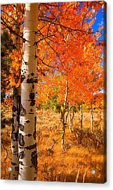 Acrylic Print featuring the photograph Orange Aspens by Aaron Whittemore