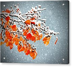 Acrylic Print featuring the photograph Orange Autumn Leaves In Snow by Tracie Kaska