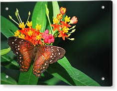 Acrylic Print featuring the photograph Orange Beauty by Amee Cave