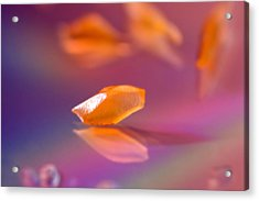 Orange Bit Acrylic Print by Lisa Knechtel