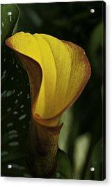 Orange Blooms Acrylic Print