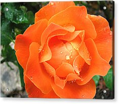 Acrylic Print featuring the photograph Orange Blossom Special by Brooks Garten Hauschild