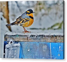 Orange Blue And Sleet Acrylic Print by VLee Watson