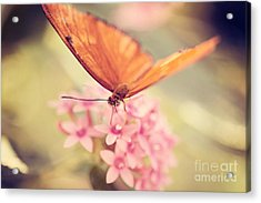 Orange Butterfly Acrylic Print by Erin Johnson