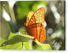 Orange Butterfly Acrylic Print by Jola Martysz