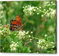 Acrylic Print featuring the photograph Orange Butterfly by Marcia Socolik