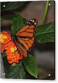 Acrylic Print featuring the photograph Orange Butterfly On Flowers by Bill Woodstock