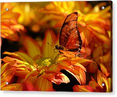 Orange Butterfly On Yellow Flowers Acrylic Print