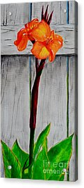 Orange Canna Lily Acrylic Print by Melvin Turner