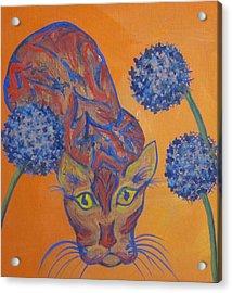 Orange Cat Acrylic Print by Cherie Sexsmith