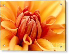 Orange Centre Acrylic Print by Anne Gilbert