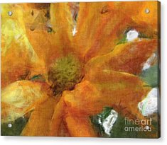 Orange Chrysanthemem Photoart Acrylic Print by Debbie Portwood
