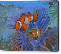 Orange Clownfish Acrylic Print by ACE Coinage painting by Michael Rothman