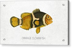 Orange Clownfish Acrylic Print by Aged Pixel