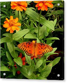 Orange Creatures Acrylic Print