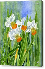 Orange Daffodils With Background Acrylic Print