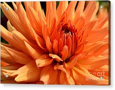 Acrylic Print featuring the photograph Orange Dahlia by Scott Lyons