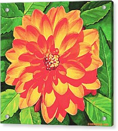 Acrylic Print featuring the painting Orange Dahlia by Sophia Schmierer