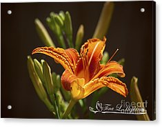 Orange Day Lily 20120615_21a Acrylic Print by Tina Hopkins