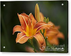 Orange Day Lily 20120624_214a Acrylic Print by Tina Hopkins