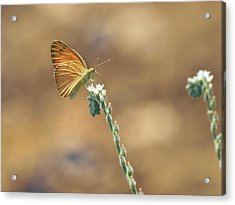 Acrylic Print featuring the photograph Orange Day by Meir Ezrachi