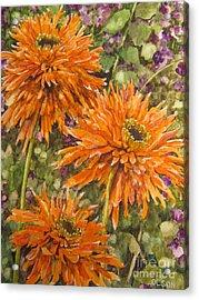 Orange Double Echinacea Acrylic Print by Karen Olson