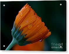 Orange Dream Acrylic Print by Ruth Jolly