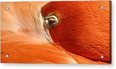 Flamingo Orange Eye Acrylic Print