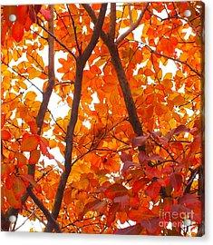 Orange Fall Color Acrylic Print by Scott Cameron