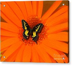 Orange Flower And A Butterfly By Saribelle Rodriguez Acrylic Print by Saribelle Rodriguez