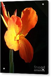 Orange Flower Canna Acrylic Print by Eric  Schiabor